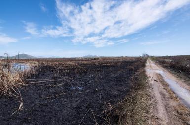 The fire in Albufera affected 438 hectares.