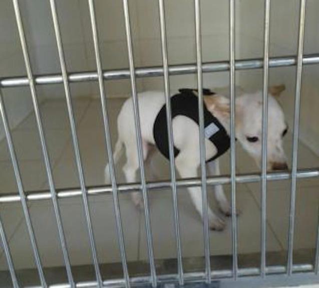 Dog at Son Reus kennel.