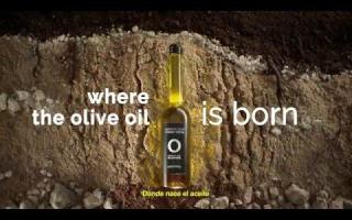 Spain where the olive oil is born