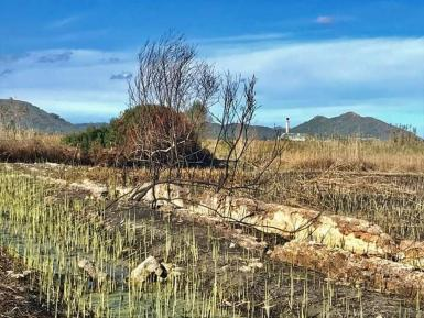 The Green Shoots in Parc d S'Albufera