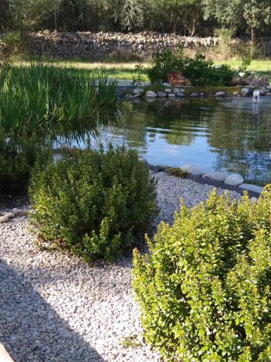 One end of the amazing swimming pond at Kairos Project.