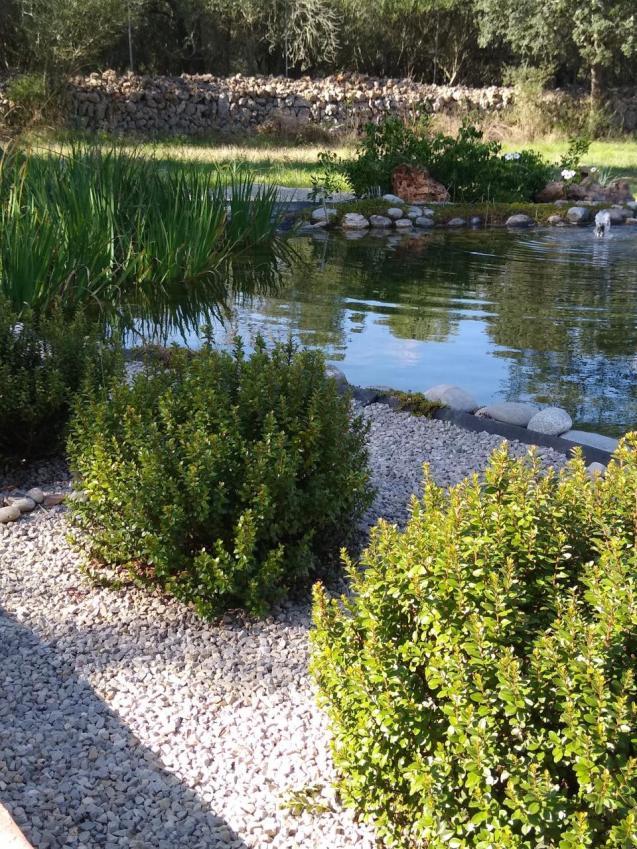 Amazing Swimming Pond