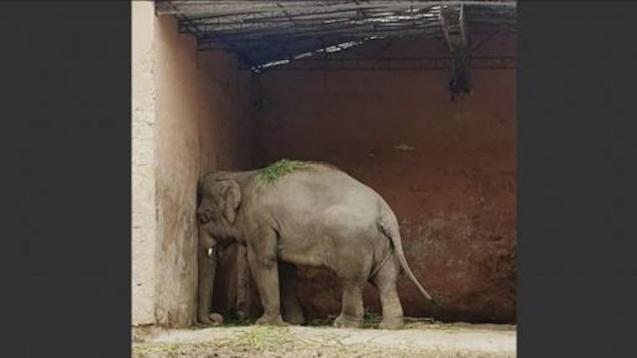 'Kaavan' - the saddest elephant in the world.