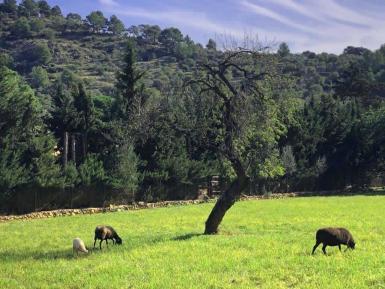 Mancor de la Vall countryside.