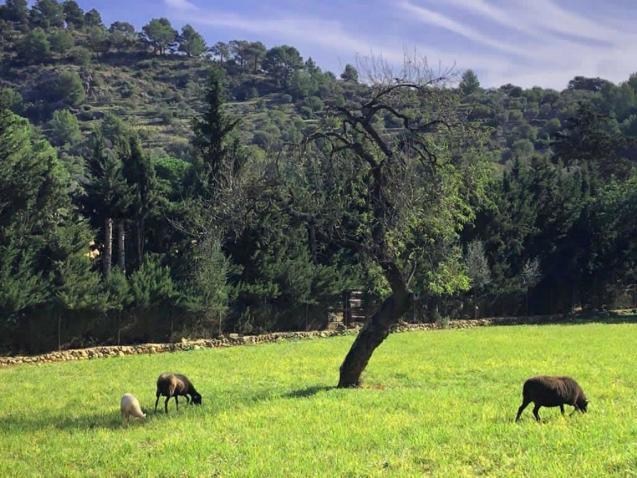Mancor de la Vall countryside