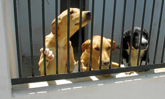 Dogs at Son Reus centre in Palma, Mallorca