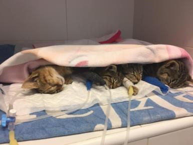Cats inside the vet.