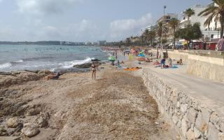 Regenerating the sand on the beach in Cala Millor