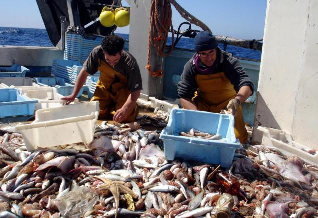 Mallorca fish catch