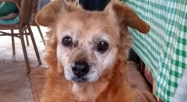 18 year old Canela, Oldie of the Year.