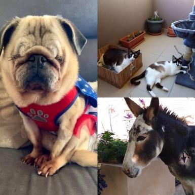 Margeary, Jazz and Bluebell, and Phillip the donkey.