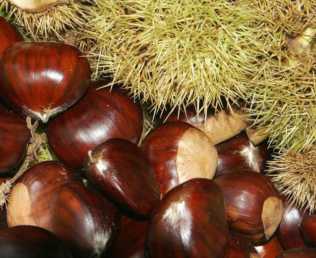 Chestnuts in Mallorca