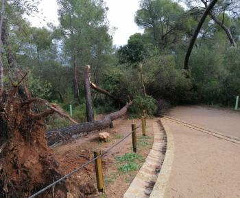 Freak storm hits Mallorca