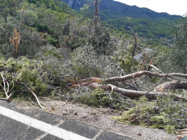 Storm damage in Mallorca's mountains