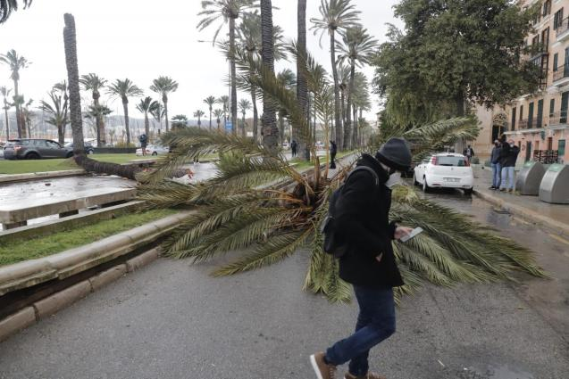 Storm damage, Mallorca