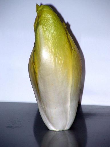 Cultivated endive (Cichorium endivis) is a relatively recent vegetable.