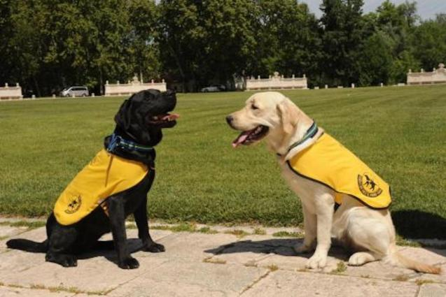 Guide Dogs.