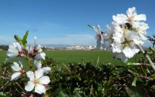 Spring day in Mallorca