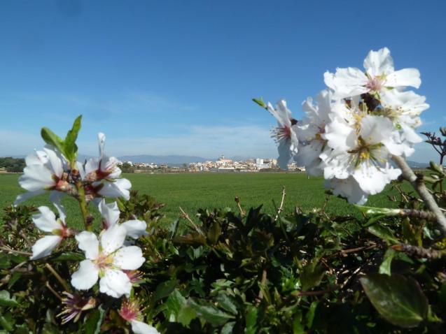Spring day in Mallorca