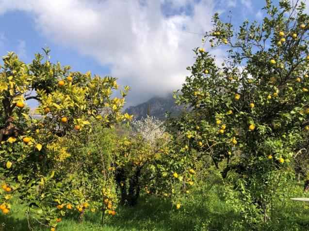 Blossom and fruit