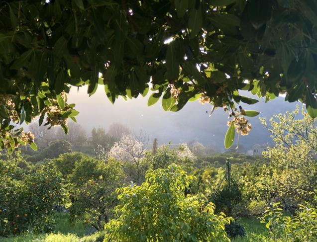 Soller valley
