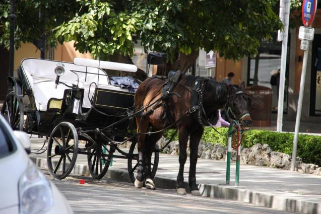 A horse buggy in Palma, Mallorca left without a driver