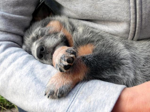 UCLA health provides a stunning list that promotes the human animal bond