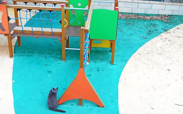 Stray cat in a playground in Mallorca