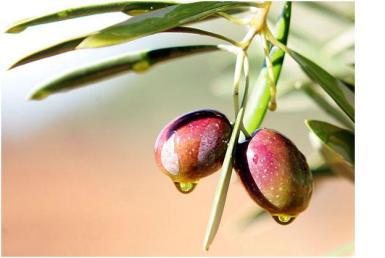 Mallorcan olives.