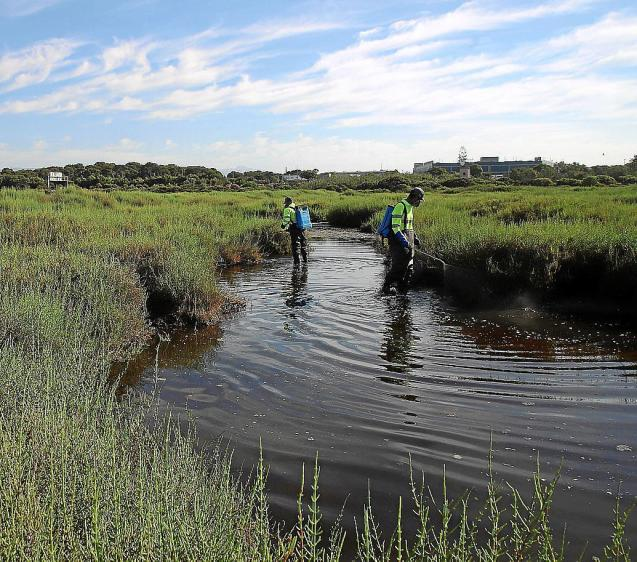 Preventing mosquito reproduction at a Mallorca wetland