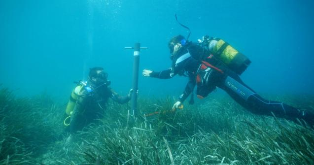 Two researchers sampling a sediment core in a Posidonia meadow
