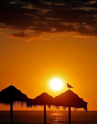 GRAFCVA6484. ALBORAYA (VALENCIA), 24/06/2021.- Una gaviota descansa sobre una sombrilla en la playa de La Patacona de Alboraya, durante la salida del sol este jueves, festividad de San Juan en la Comunitat Valenciana. EFE/Manuel Bruque  Amanece el día de San Juan