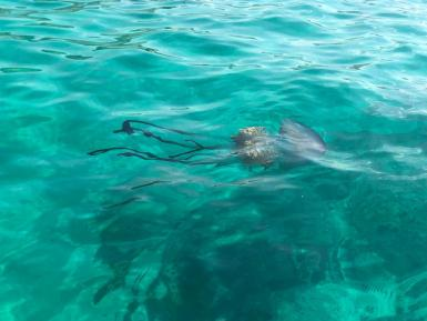 Giant jellyfish are uncommon in Mallorcan waters; this one was seen two years ago.