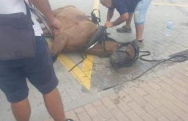 Horse in Mallorca after accident