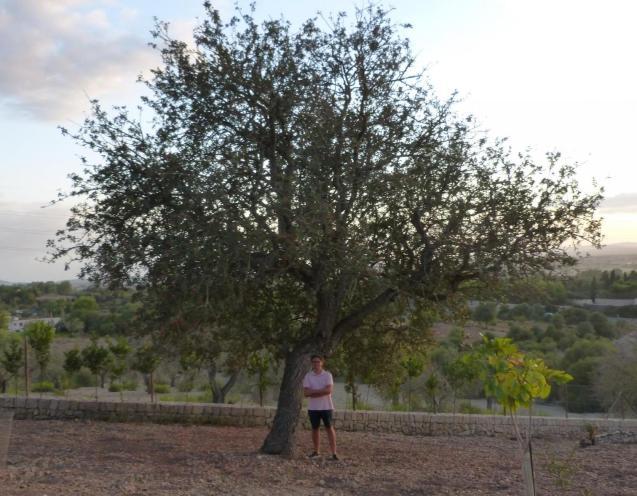 Jaume Rigo with his atzerolera tree.