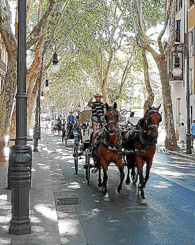 Galley horses in Palma.