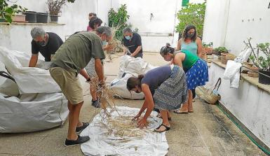 Volunteers collecting seeds.