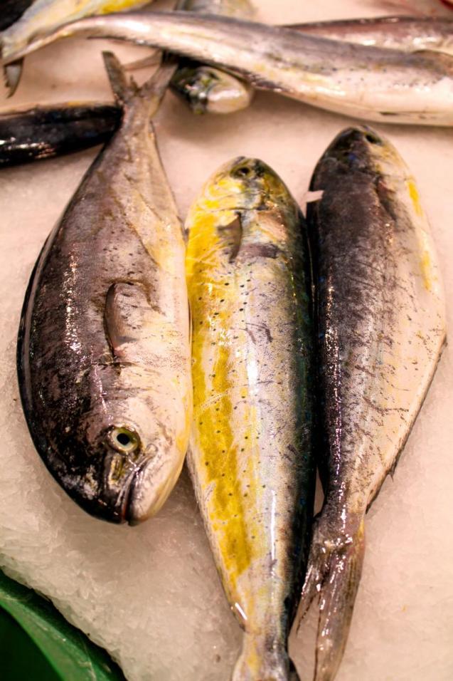 Llumpuga (Coryphaena hippurus) is sometimes known as dolphin fish