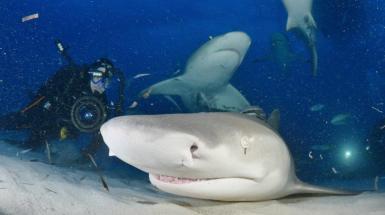 Dan Abbott filming sharks.