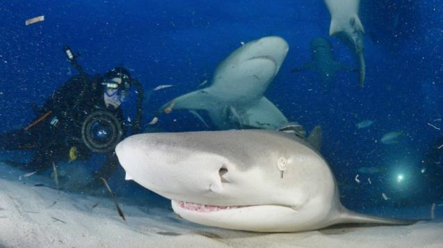 Dan Abbott filming sharks in Balearic waters
