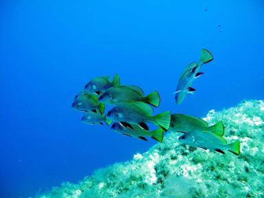Marine life under the Balearic waters.