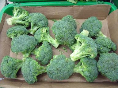 UK that farmers in Lincolnshire are offering £30 per hour to pick broccoli.