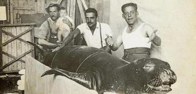 Fishermen with a monk seal trapped en Cala Blanca in Ciutadella in 1950. archive photo.