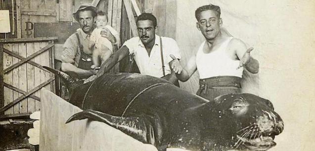Fishermen with a monk seal trapped en Cala Blanca in Ciutadella in 1950.