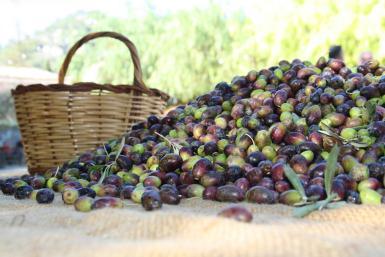 Mallorca's dark-skinned olives