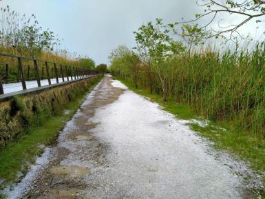 In October 2001, S'Albufereta was declared a nature reserve.