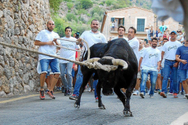 Animal-welfare organisations back Balearic bullfight law