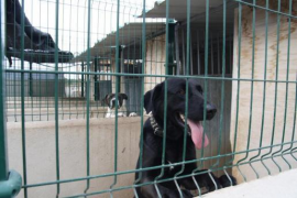 Crowdfunding appeal for new animal refuge