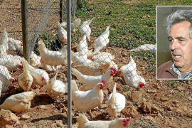Communications and chicken farming: the week in Majorca