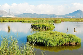 "Albufera at risk because of ""saturation"" in tourism areas"